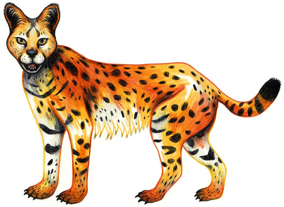 serval_web